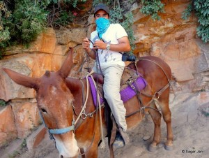 Mule riding down the Kaibab trail